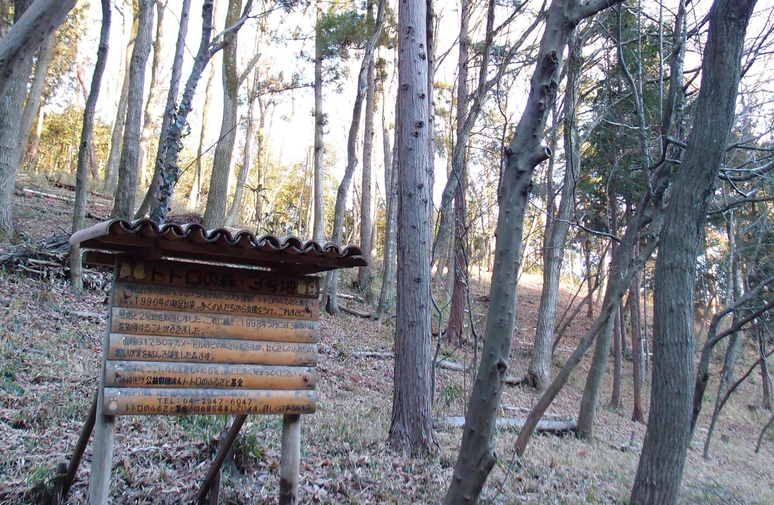 日本龍貓森林