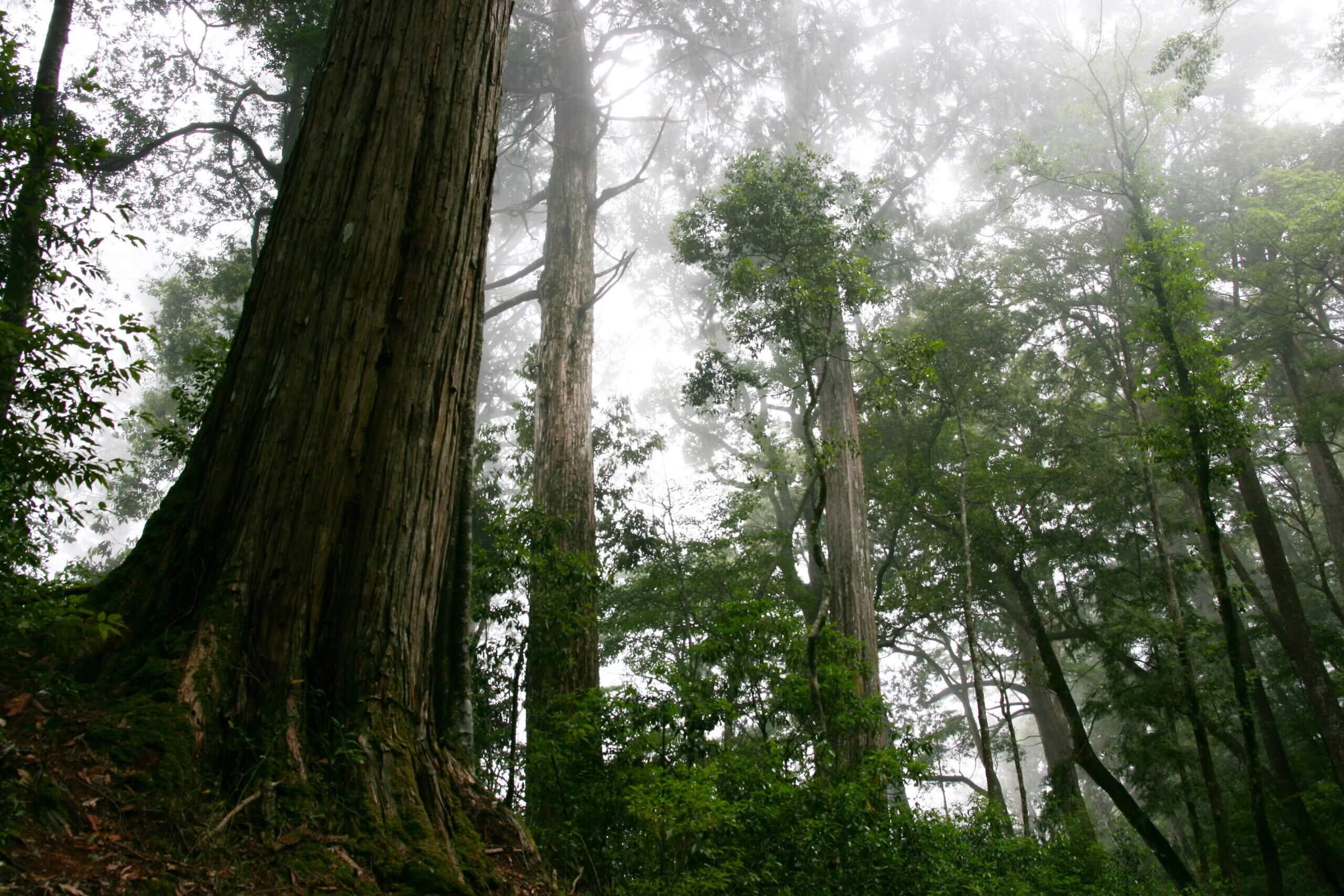 未完成的案例:公益信託森林文化博物館保存基...