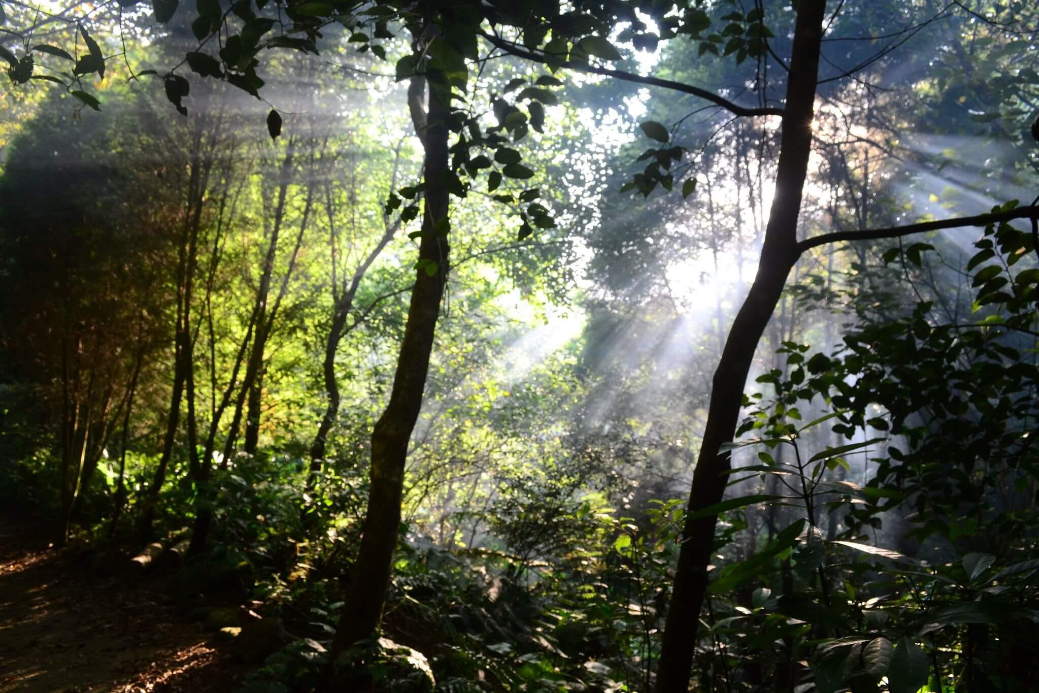 夢想的森林:亞方黑姬(二)