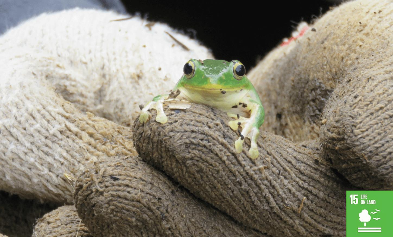 石門阿里磅的阿蛙