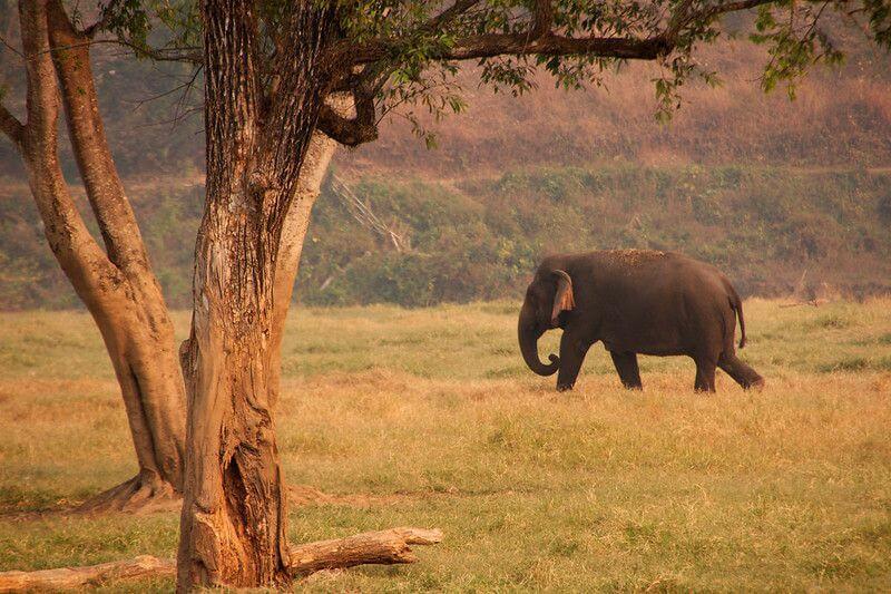 在泰國清邁大象天堂