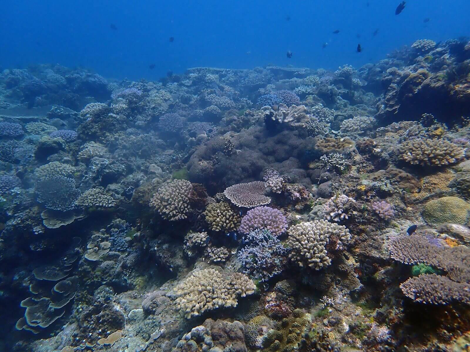 墾丁的珊瑚礁_唐寧襄攝