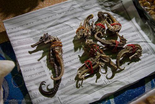 來去柬埔寨 守護海洋中的小精靈
