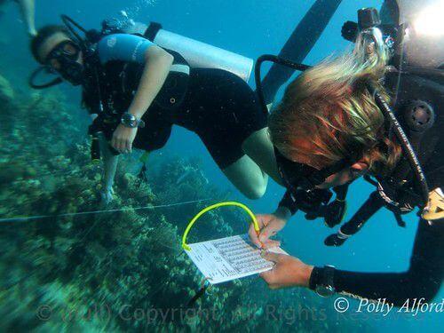 潛入海下 守護加勒比海珍珠