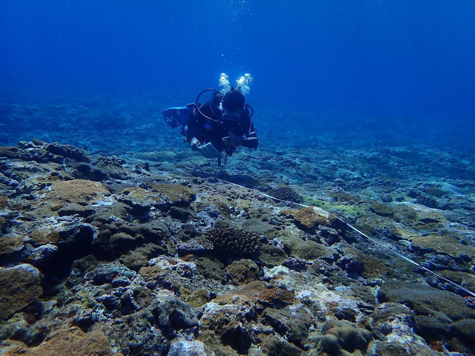 珊瑚礁體檢仰賴各地志工參與協助,攝影:湯谷明