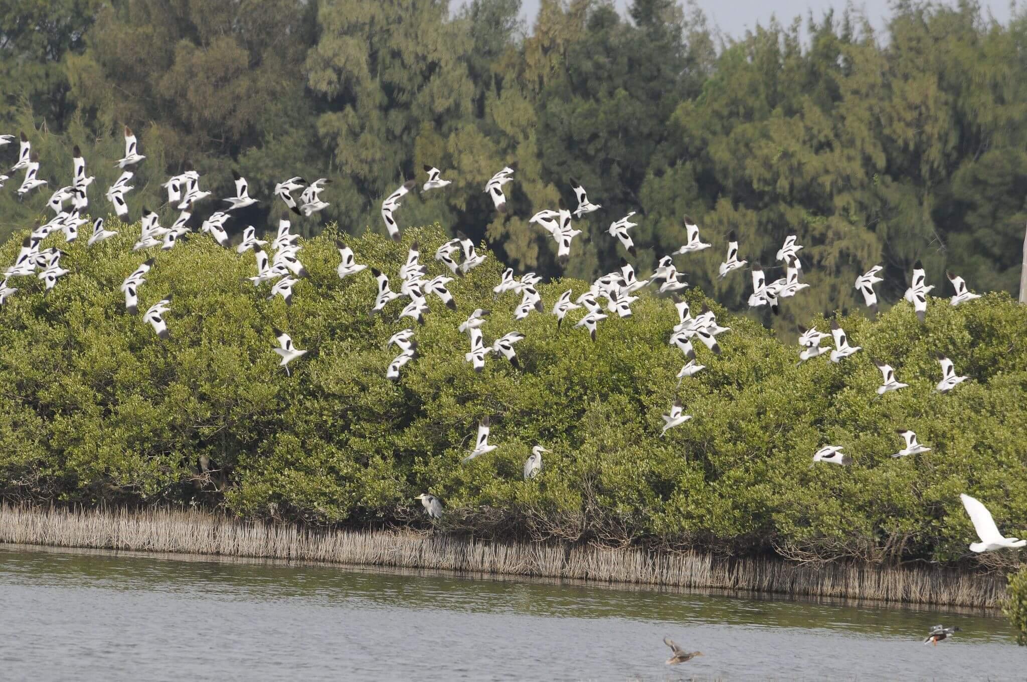 環境保護公益信託於濕地經營管理之應用(三)