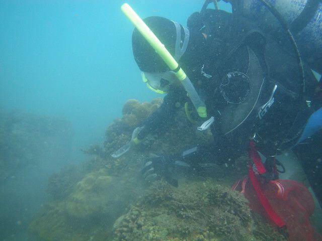 2014東海岸珊瑚礁體檢成果