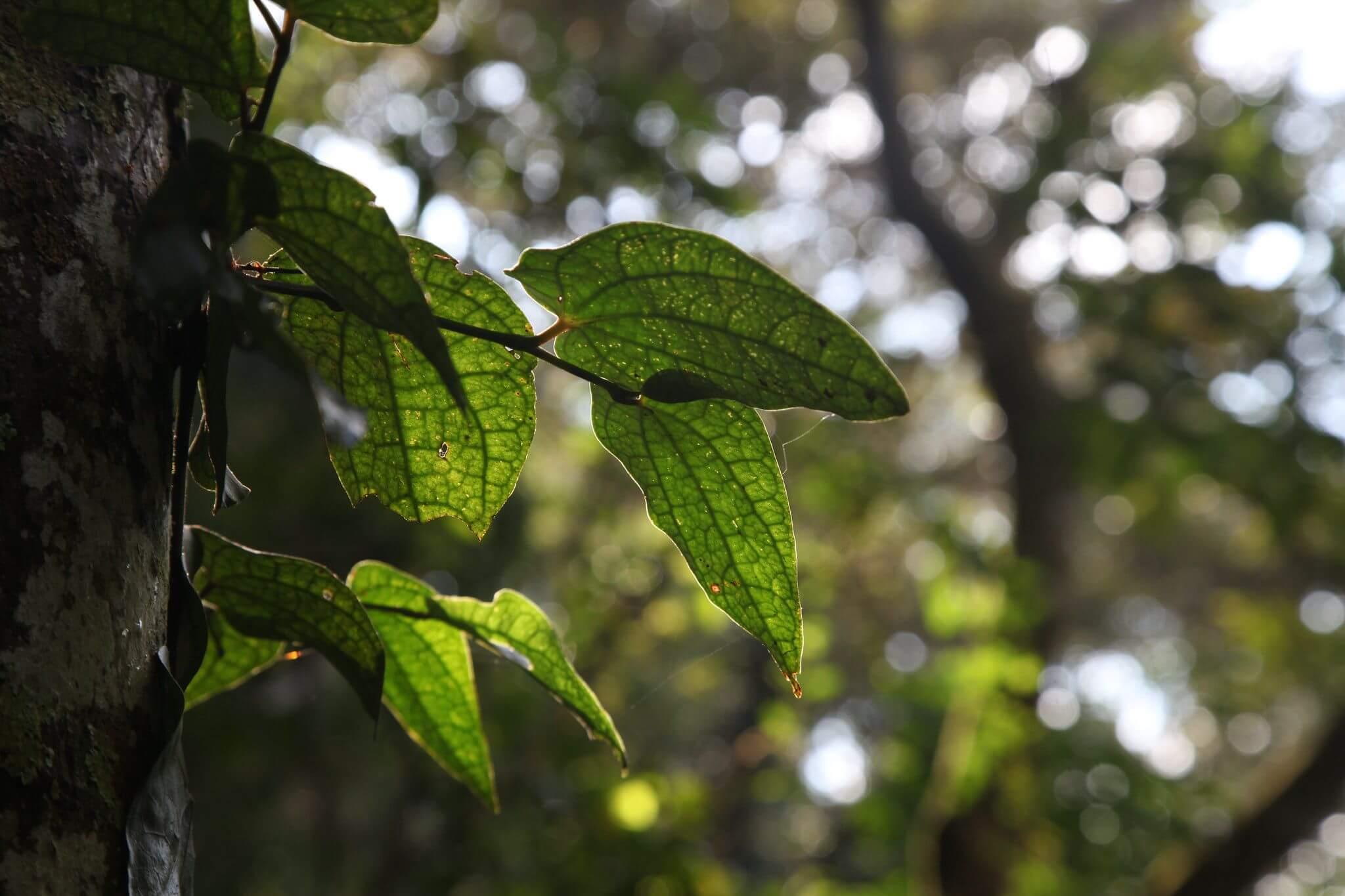 環境公益信託實務(二):稅賦課不課?