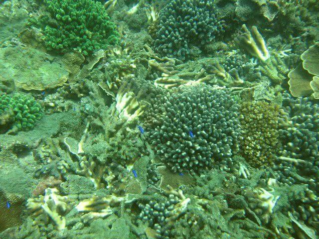 2015年台灣珊瑚礁體檢成果