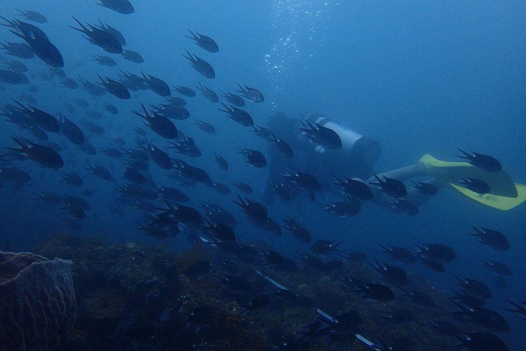 2016野柳珊瑚礁體檢