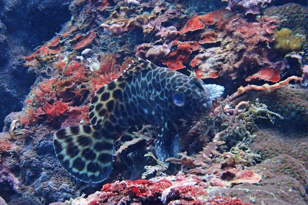 2016番仔澳珊瑚礁體檢成果