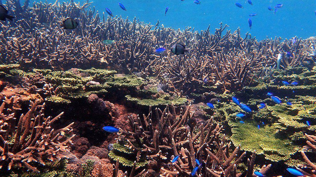 2016澎湖東嶼坪珊瑚礁體檢成果