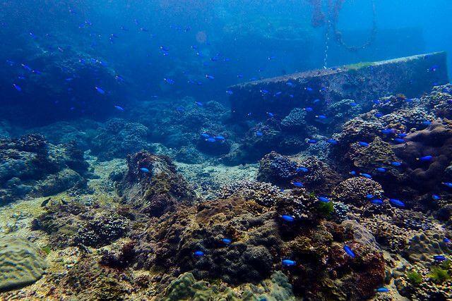2017鼻頭角珊瑚礁體檢(春季)