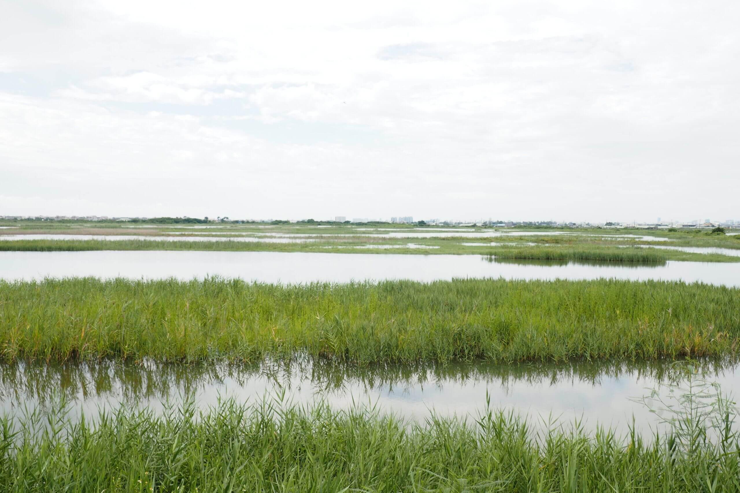 環境保護公益信託於濕地經營管理之應用(一)