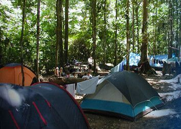 用環境信託 留存印尼雨林