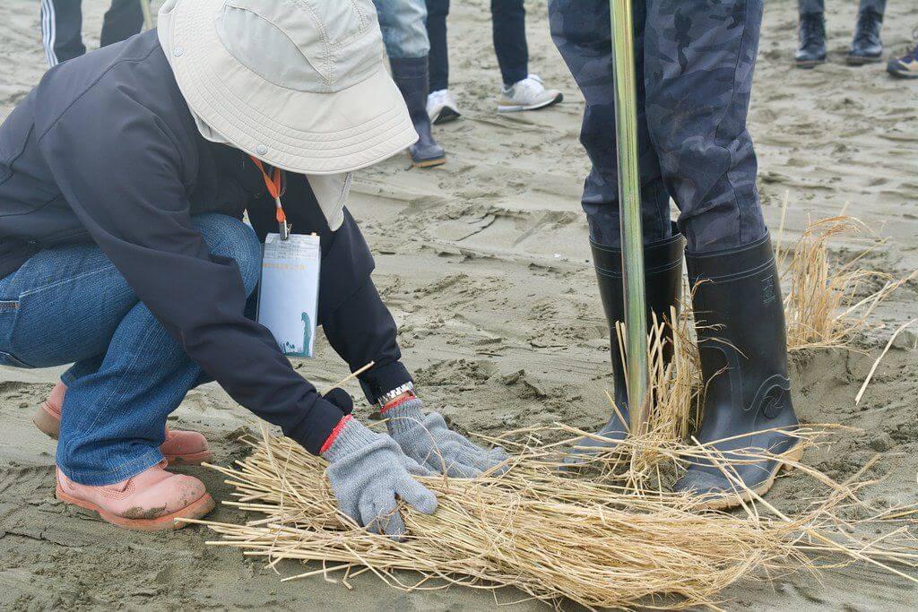 樂活台灣協會帶領志工來到頂頭額汕,以稻草進行護沙工作。攝影:洪碩辰。
