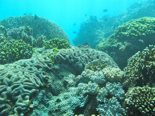 東海岸開發未落實「海下環評」 美麗珊瑚蒙塵