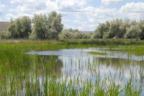 捐贈保育地役權 復育溼地 帶來環境與經濟的...
