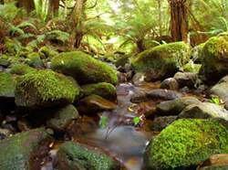 為後代子孫保護土地,養護水資源與保育野生動...