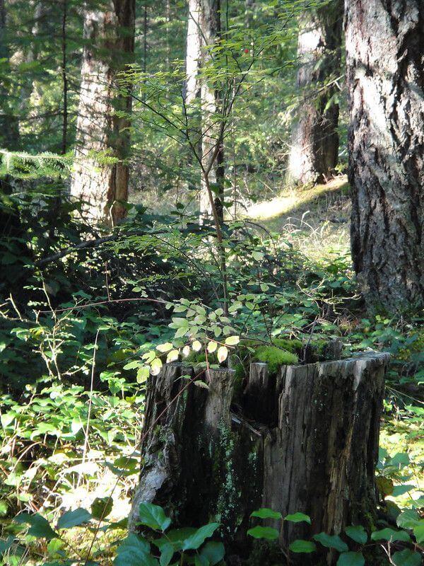 加拿大樹農,以信託為永續土地利用開啟新典範...