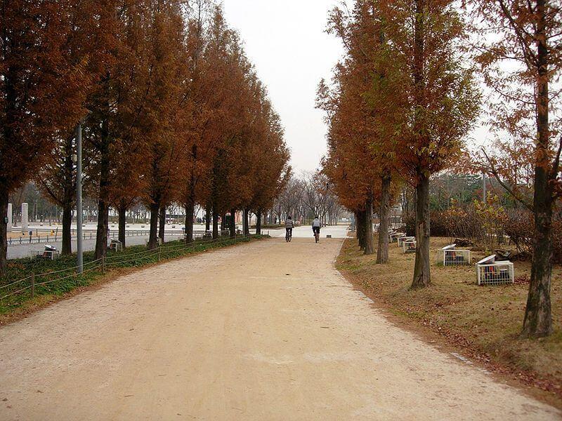 綠色夢想,與人們一起打造的綠色城市-首爾綠...