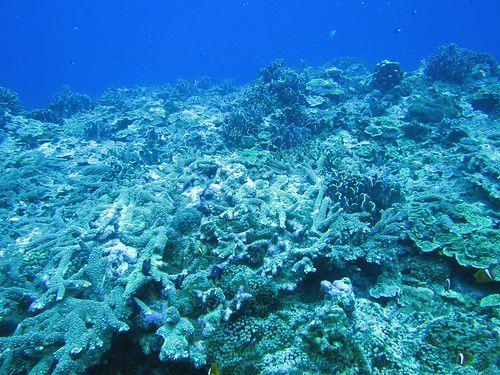 2013蘭嶼珊瑚礁體檢成果