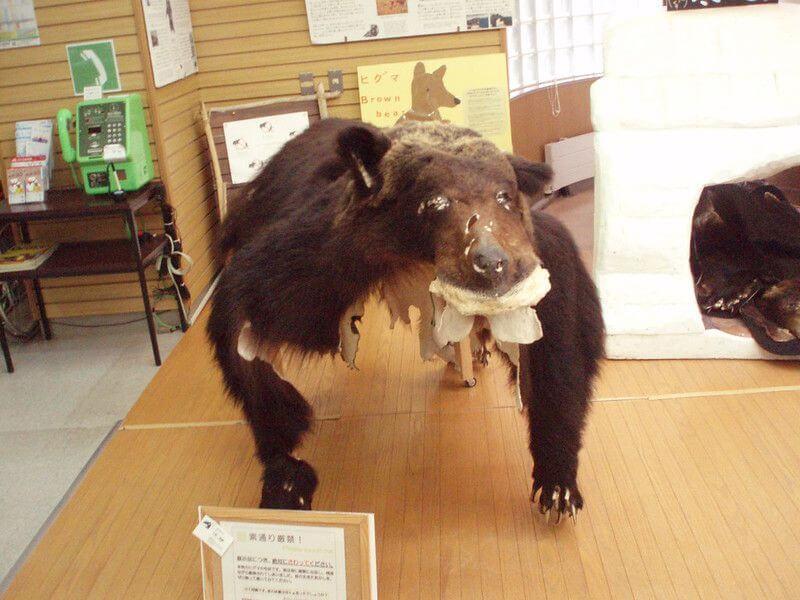 知床自然中心內的活動布置-以熊的標本介紹熊的習性。