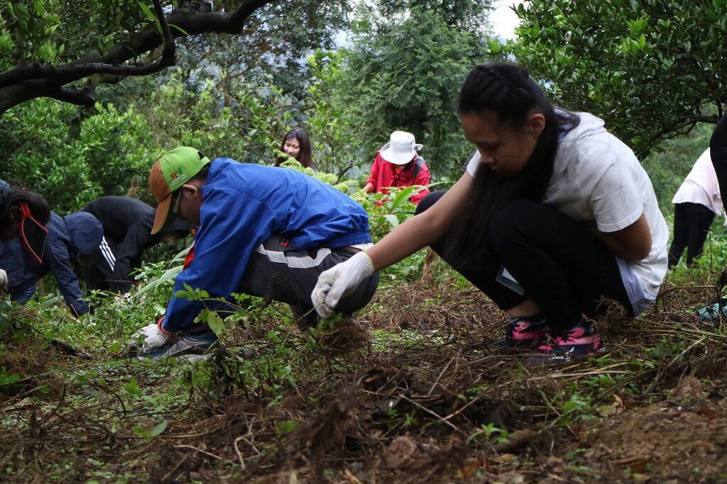 雨天的農事體驗 伊頓飛瑞慕品生態工作假期