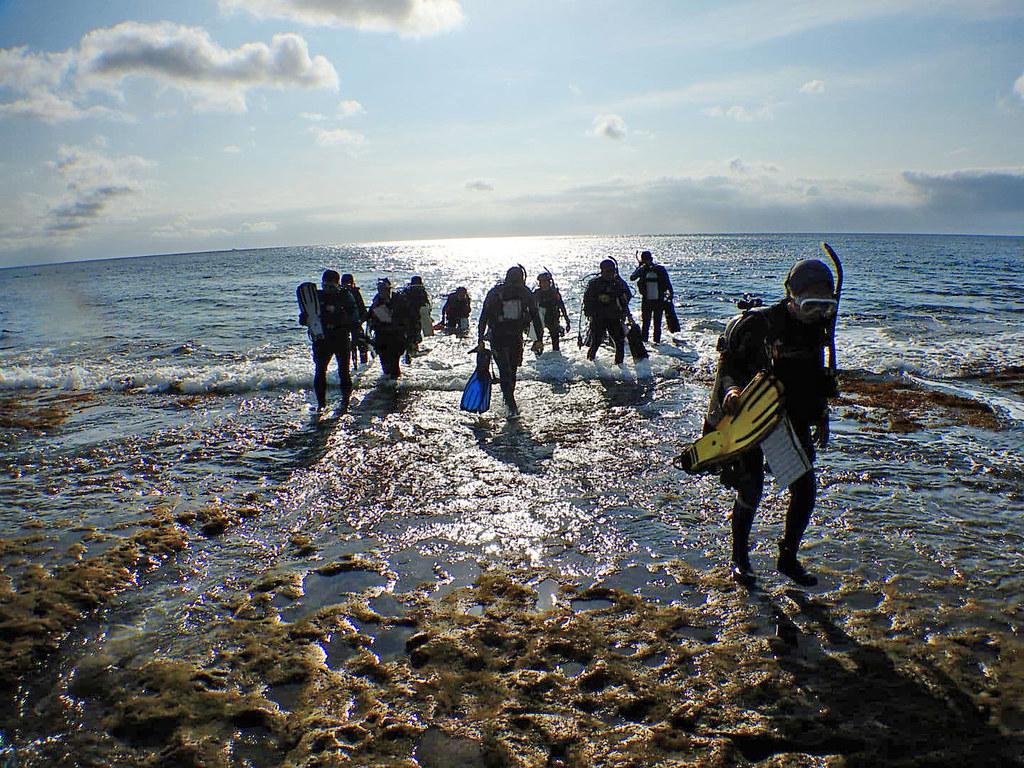 歷年台灣珊瑚礁體檢成果報告