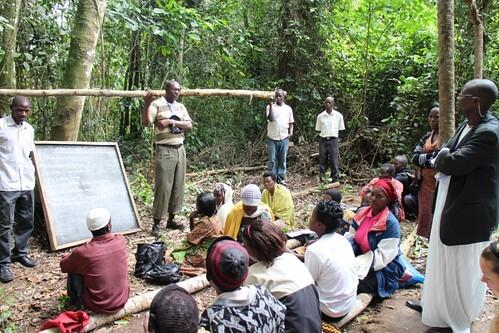 精靈與藥草之森 傳統文化與現代保育行動