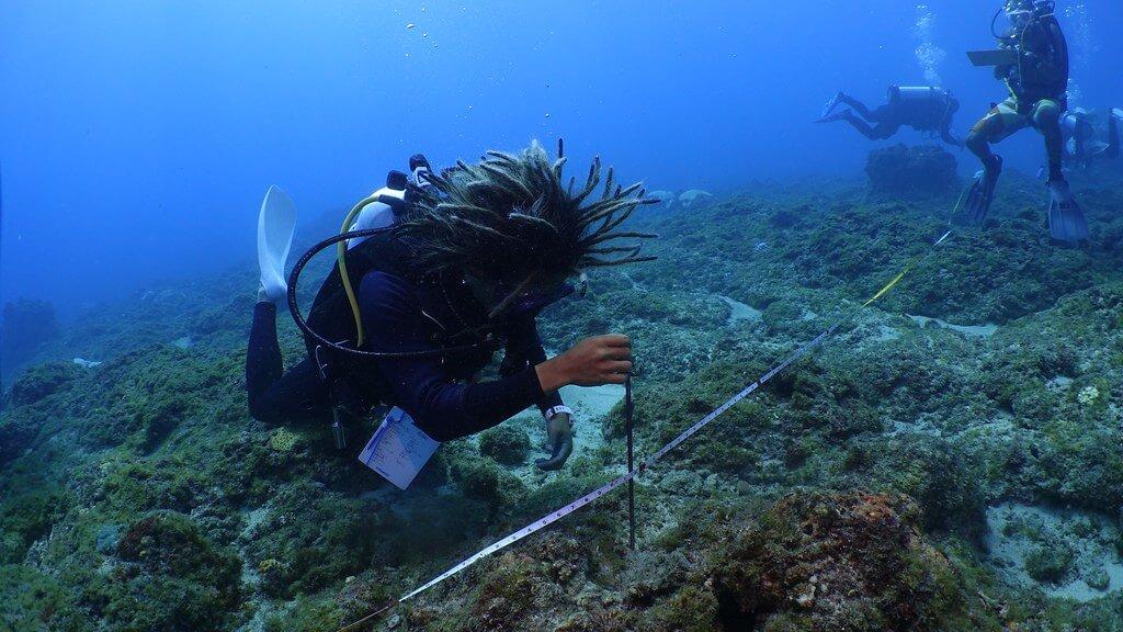 2020小琉球珊瑚礁體檢成果報告
