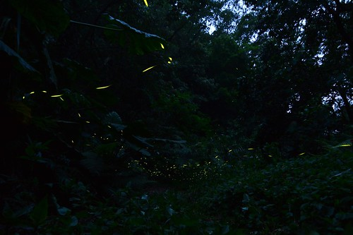 「勞動」假期來去自然谷 浪漫螢火相伴山居時...