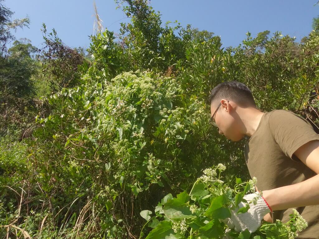 幫幫鹿寮坑果樹! 綠藤生機志工化身除草快手