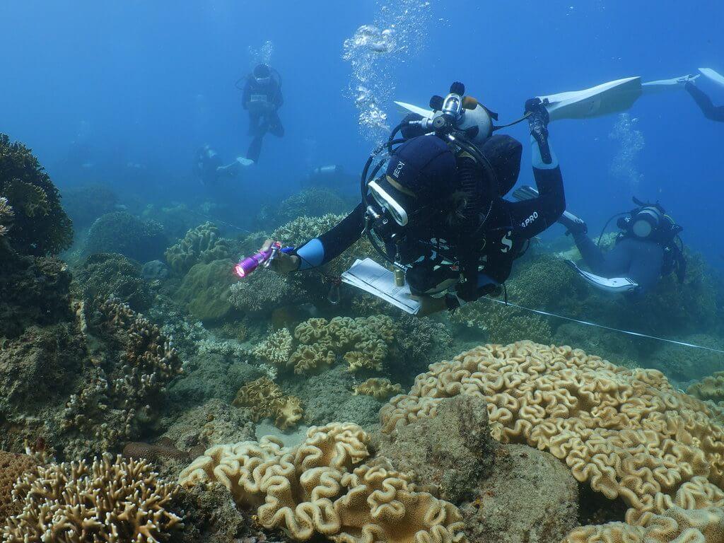 於墾丁後壁湖軟珊瑚區,志工正在搜索無脊椎動物(圖片來源:蘇淮)