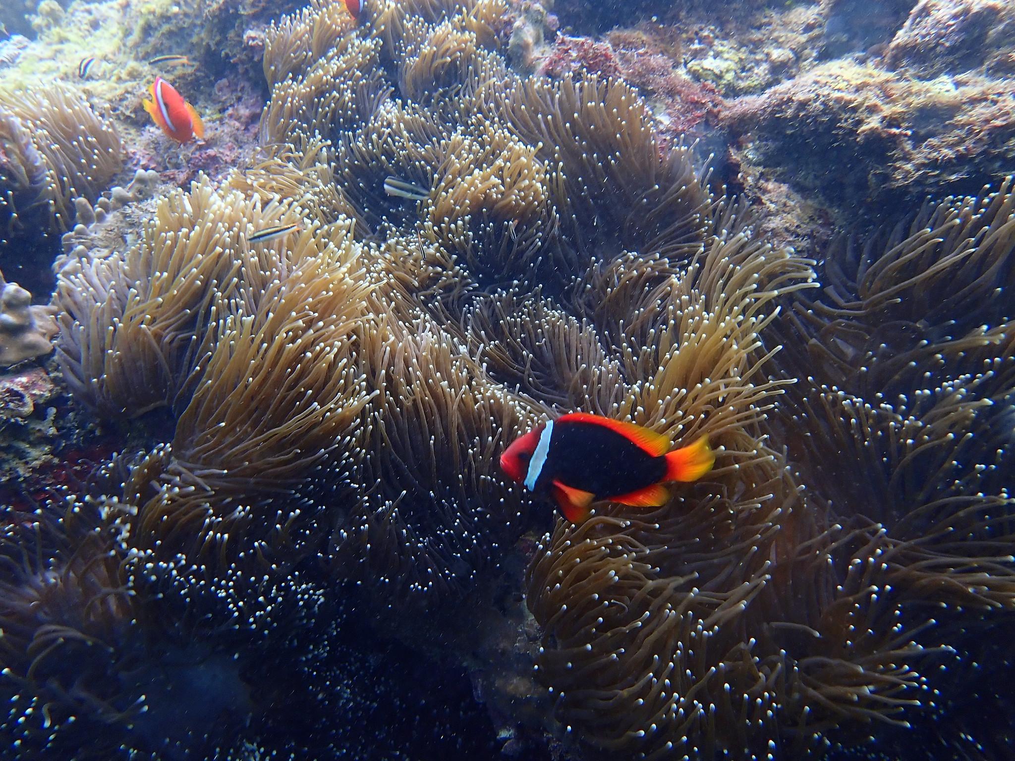 2021 墾丁合界春季珊瑚礁體檢報告
