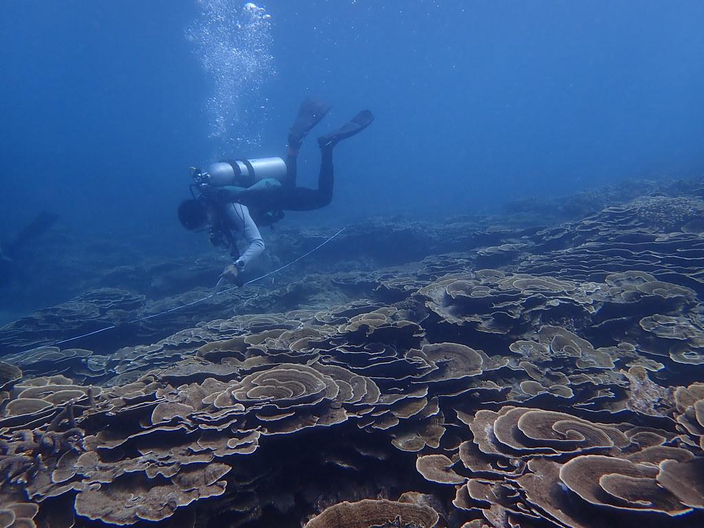 2021 澎湖嶼坪珊瑚礁體檢成果報告