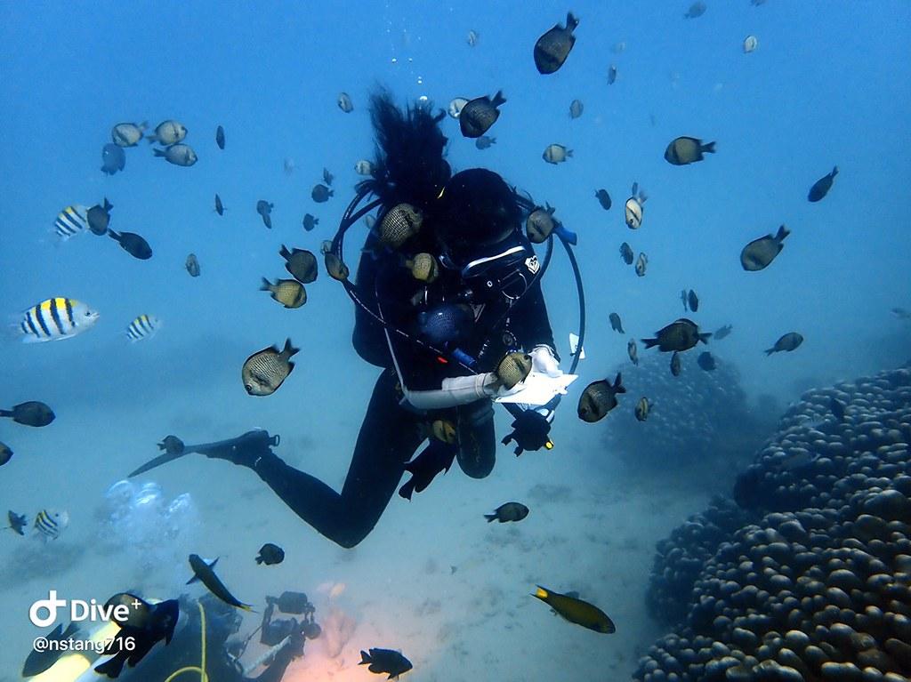 日常防曬照樣能友善海洋 珊瑚礁體檢職人有醫...