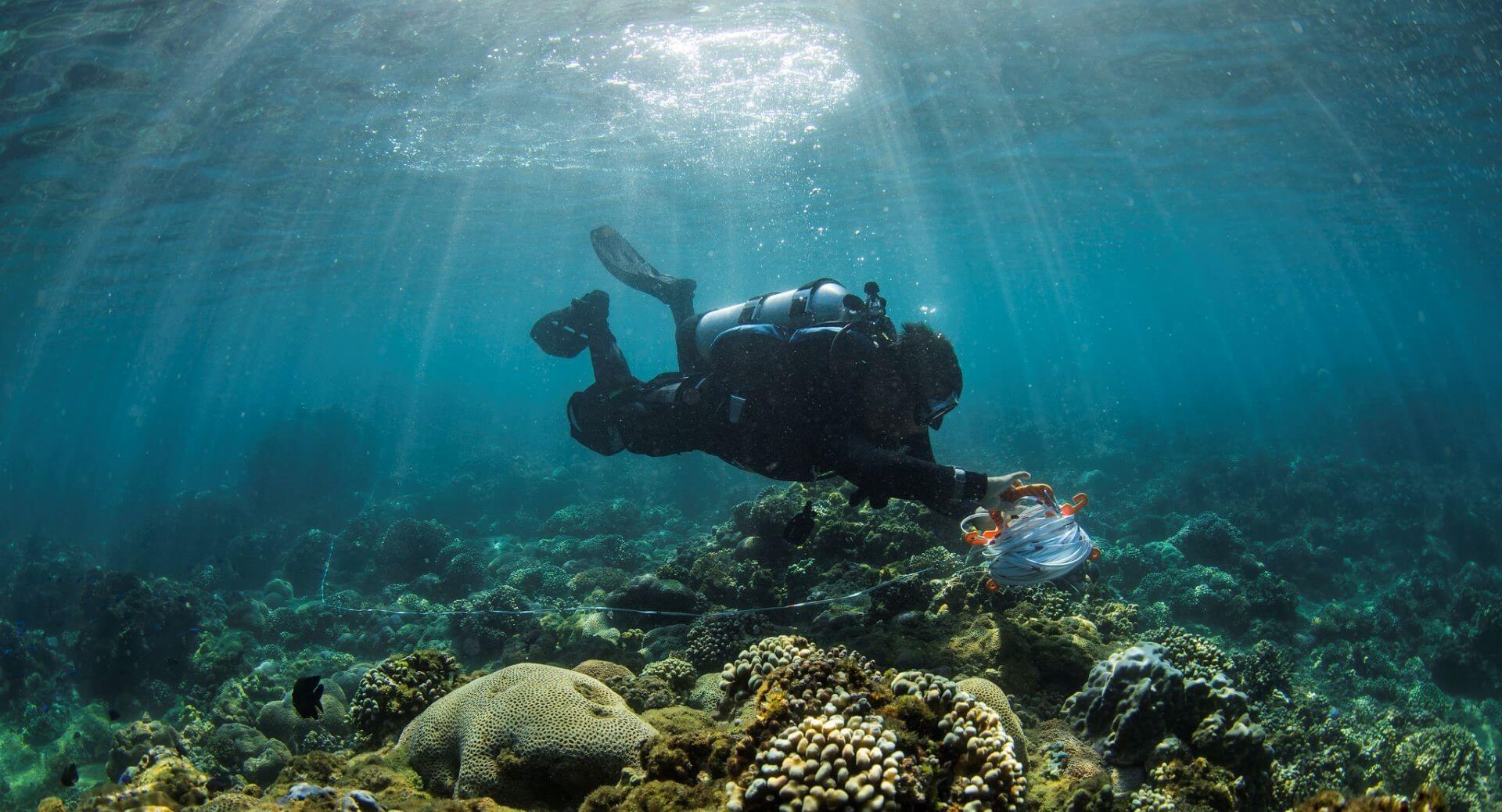 2020台灣珊瑚礁體檢報告出爐